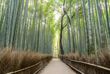 Arashiyama Bamboo Grove in the Morning, Kyoto, Japan Photographic Print by Discover Japan