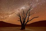 Dead Vlei, Dusk, the Namib-Naukluft National Park of Namibia Fotografisk tryk af Felix Lipov