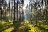 Ray of Light on a Path in Forest Fotografie-Druck von Michal Mierzejewski