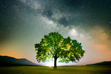 Lonely Tree on Field under Milky Way Galaxy, Dobrogea, Romania Photographic Print by Liviu Pazargic