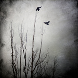 Two Bird Flying Near a Tree Reproduction photographique par  Trigger Image