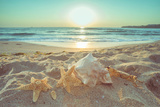 Starfish and Shells on the Beach at Sunrise Lámina fotográfica por Deyan Georgiev