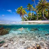 Tropical Island under and Above Water Lámina fotográfica por  Blueorangestudio