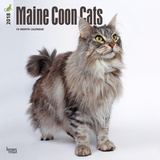 Maine Coon Cats - 2018 Calendar Calendarios