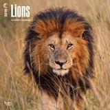 Lions - 2018 Calendar Kalenders