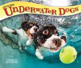 Underwater Dogs - 2018 Boxed Calendar Kalenders