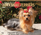 For the Love of Yorkshire Terriers Deluxe - 2018 Calendar Kalenders