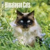 Himalayan Cats - 2018 Calendar Calendriers
