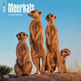 Meerkats - 2018 Calendar Kalenterit
