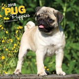 Pug Puppies - 2018 Calendar Calendarios