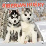 Siberian Husky Puppies - 2018 Calendar Kalenders