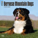 Bernese Mountain Dogs - 2018 Calendar Calendriers