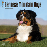 Bernese Mountain Dogs - 2018 Calendar Kalenders