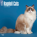 Ragdoll Cats - 2018 Calendar Calendarios