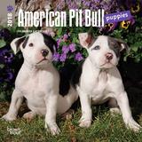 American Pit Bull Terrier Puppies - 2018 Mini Calendar Kalenders