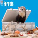 Ferrets - 2018 Calendar カレンダー