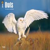 Owls - 2018 Calendar Calendriers