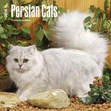Persian Cats - 2018 Calendar Calendriers
