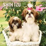 Shih Tzu - 2018 Calendar Calendriers