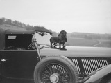 Dachshund standing on the bonnet of Charles Mortimers Bentley, c1930s Reproduction photographique par Bill Brunell