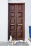 Three Cats Sitting in Front of a Wooden Door in Kastro Fotografisk trykk av Krista Rossow