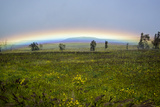 A Rainbow Arches Above the Hawaiian Landscape Photographic Print by Anne Keiser