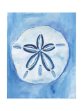 Sand Dollar Art by Anne Seay