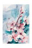 Aqua Blossoms Plakater av Sophia Rodionov