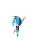 Blue Bird III Posters av Sophia Rodionov