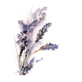 Lavender Kunst av Sophia Rodionov