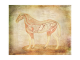 Horse Anatomy 201 Posters by Ramona Murdock