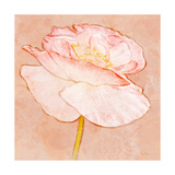 Sweet Peach Poppy I Art by Ramona Murdock