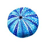 Sea Blue Urchin Pósters por Crystal Smith