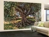 Olivenbaum Wandgemälde