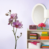 Orchidee Wall Decal