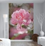 Bouquet Wallpaper Mural