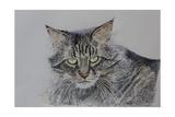 Pennsylvania Cat, 2009 Reproduction procédé giclée par Anthony Butera