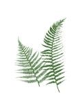 Green Ferns Posters por Jace Grey