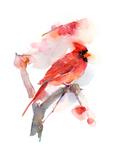 Red Cardinal, 2016 Reproduction procédé giclée par John Keeling