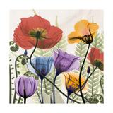 Flowers And Ferns Premium Giclée-tryk af Albert Koetsier
