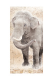 African Traveling  Animals Elephant Prints by Jace Grey