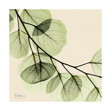 Mint Eucalyptus 2 Kunstdrucke von Albert Koetsier