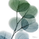 Dull Eucalyptus Metal Print by Albert Koetsier
