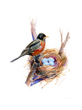 Robin with Nest;2016 Giclee-trykk av John Keeling
