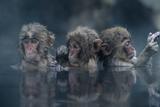 Trio Fotografisk trykk av Takeshi Marumoto