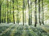 Amongst the Trees Giclee-trykk av Assaf Frank