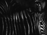 Ohne Titel Fotografie-Druck von Antonio Grambone