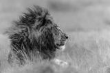 The King Is Alone Fotografie-Druck von Massimo Mei