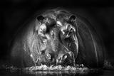 Power Photographic Print by Gorazd Golob