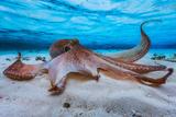 Kraken Fotografie-Druck von Barathieu Gabriel